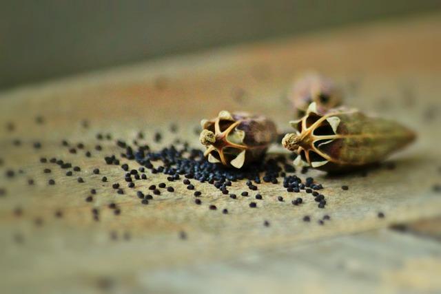 Semillas de amapola exfoliante corporal natural para una piel suave
