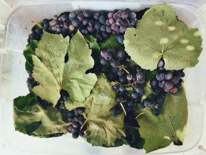 Las uvas son uno de los ingredientes tops de la cosmética natural